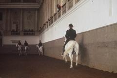 """""""Spanische Hofreitschule Wien - Gestaltung der Bande"""""""